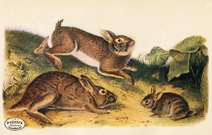 PDXC19439 -- Small Furry Animals Color Illustration