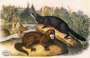 PDXC19443 -- Small Furry Animals Color Illustration