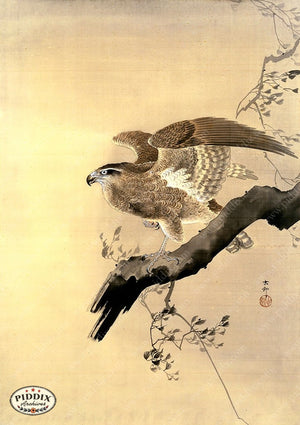 PDXC19510 -- Japanese Hawk Woodblock