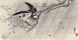 PDXC19559-- Japanese Bird and Branch Woodblock