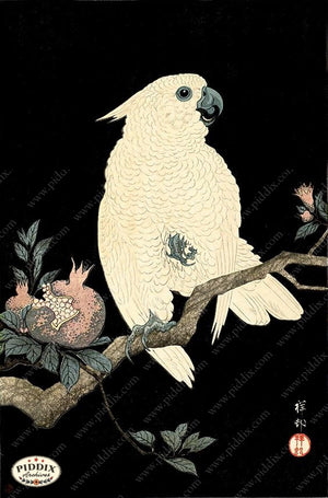 PDXC19793-- Japanese Cockatoo and Pomegranate Woodblock