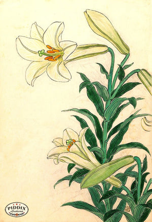 PDXC19797-- Japanese Lily Woodblock