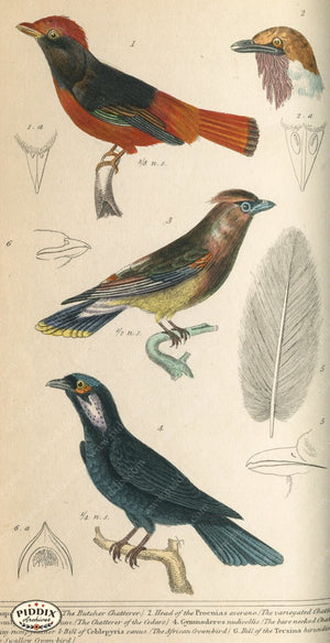 Pdxc2102 -- Birds Color Illustration