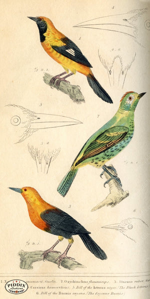Pdxc2103 -- Birds Color Illustration