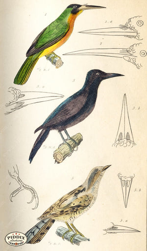 Pdxc2104 -- Birds Color Illustration