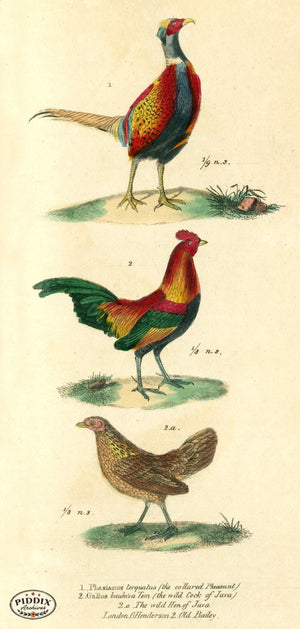 Pdxc2105 -- Birds Color Illustration