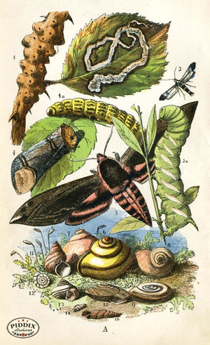 Pdxc2321 -- Butterflies & Bugs Color Illustration