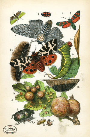 Pdxc2322 -- Butterflies & Bugs Color Illustration