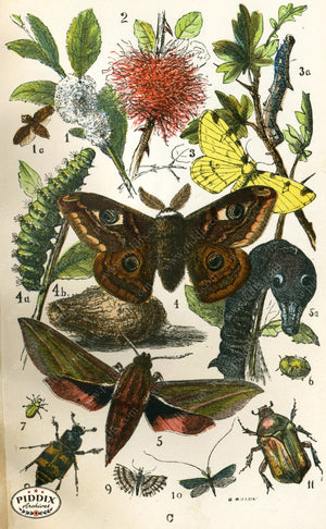 Pdxc2323 -- Butterflies & Bugs Color Illustration