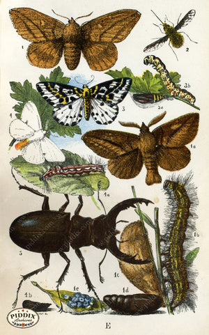 Pdxc2324 -- Butterflies & Bugs Color Illustration