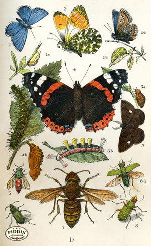Pdxc2325 -- Butterflies & Bugs Color Illustration