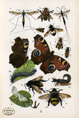 Pdxc2327 -- Butterflies & Bugs Color Illustration