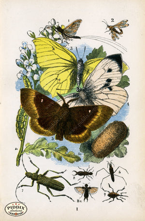 Pdxc2328 -- Butterflies & Bugs Color Illustration