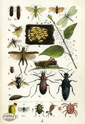 Pdxc2329 -- Butterflies & Bugs Color Illustration