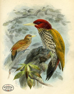 Pdxc2347 -- Birds Color Illustration