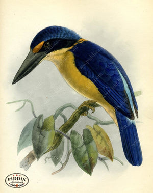 Pdxc2348 -- Birds Color Illustration