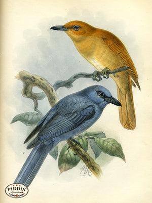Pdxc2349 -- Birds Color Illustration