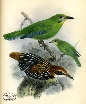 Pdxc2351 -- Birds Color Illustration