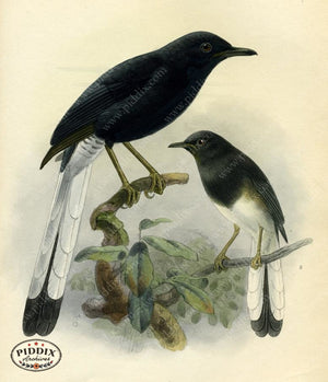 Pdxc2353 -- Birds Color Illustration