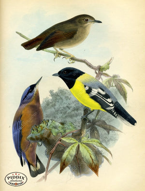 Pdxc2354 -- Birds Color Illustration