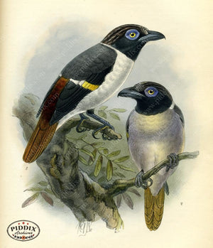 Pdxc2355 -- Birds Color Illustration