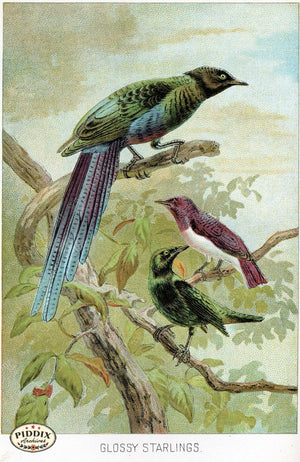 Pdxc2452 -- Birds Color Illustration