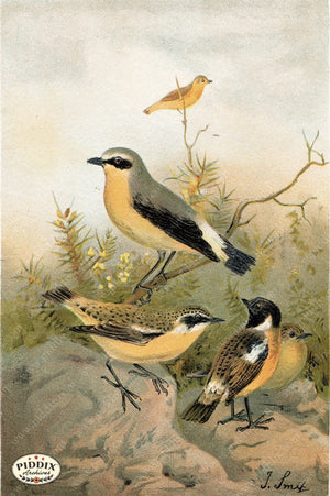Pdxc2454 -- Birds Color Illustration