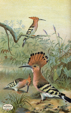Pdxc2455 -- Birds Color Illustration