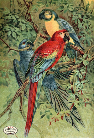 Pdxc2456 -- Birds Color Illustration