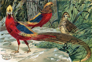 Pdxc2457 -- Birds Color Illustration