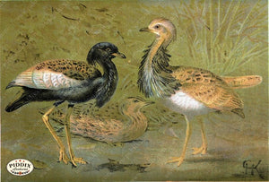 Pdxc2458 -- Birds Color Illustration