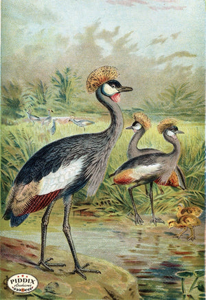 Pdxc2459 -- Birds Color Illustration