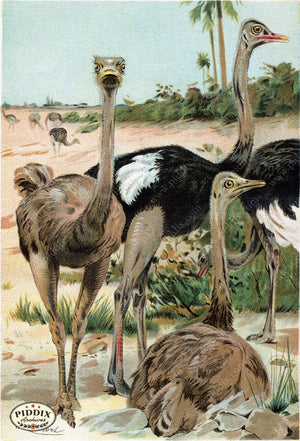 Pdxc2460 -- Birds Color Illustration