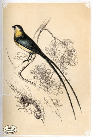 Pdxc2466 -- Birds Color Illustration