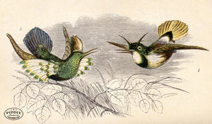 Pdxc2479 -- Birds Color Illustration