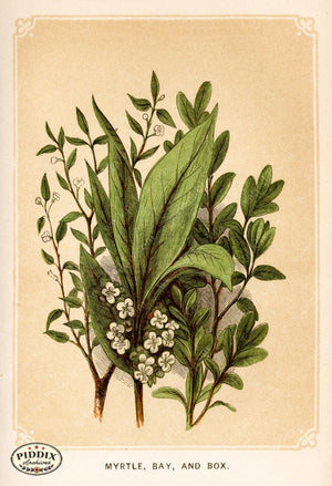 Pdxc2578 -- Plants & Leaves Color Illustration