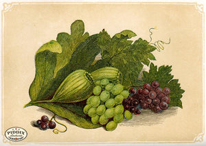 Pdxc2581 -- Plants & Leaves Color Illustration