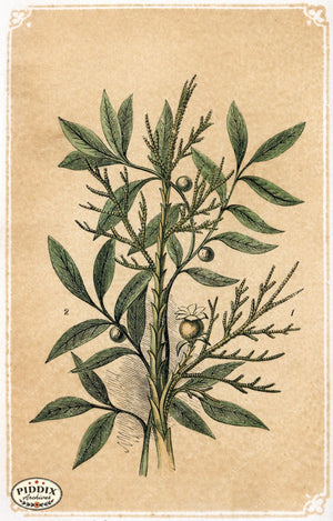 Pdxc2582A -- Plants & Leaves Color Illustration