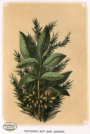 Pdxc2582B -- Plants & Leaves Color Illustration