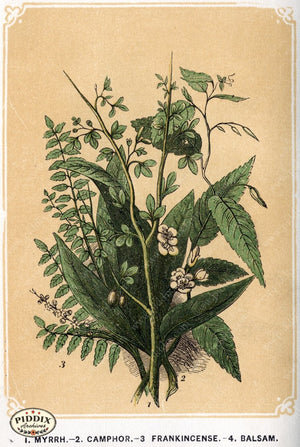 Pdxc2584 -- Plants & Leaves Color Illustration
