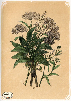 Pdxc2585 -- Plants & Leaves Color Illustration