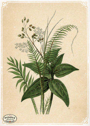 Pdxc2586 -- Plants & Leaves Color Illustration