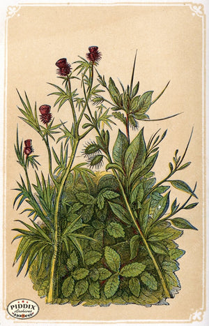 Pdxc2587 -- Plants & Leaves Color Illustration