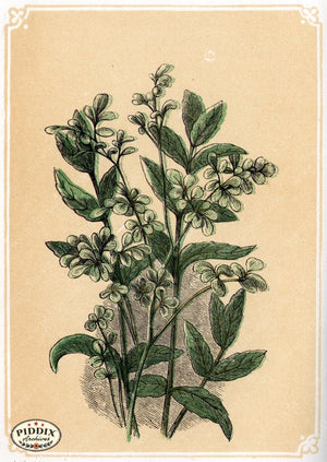 Pdxc2589 -- Plants & Leaves Color Illustration