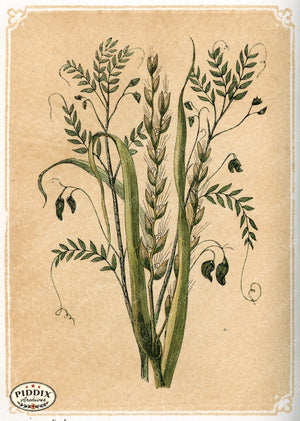 Pdxc2590A -- Plants & Leaves Color Illustration