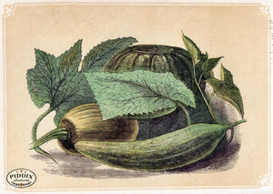 Pdxc2592 -- Plants & Leaves Color Illustration