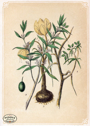 Pdxc2593 -- Plants & Leaves Color Illustration
