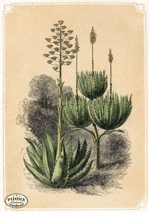 Pdxc2594 -- Plants & Leaves Color Illustration