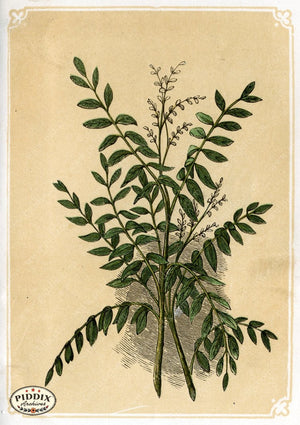 Pdxc2597 -- Plants & Leaves Color Illustration