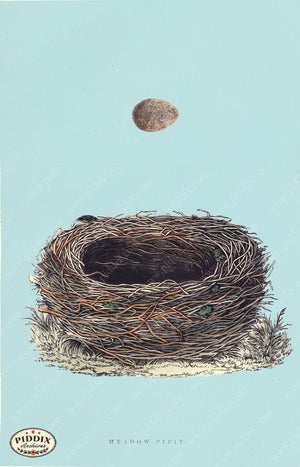Pdxc2945B -- Bird Eggs & Nests Color Illustration